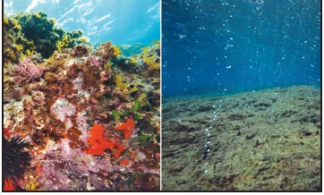 See firsthand in virtual reality the impact of carbon emissions on the ocean